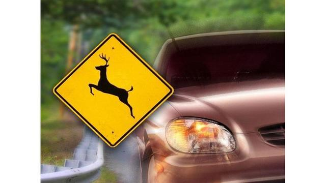 City of Woodland Park and wildlife officials discussing options for controlling deer population