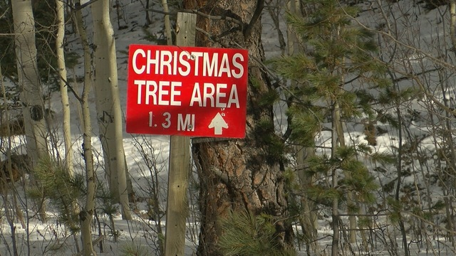 everything you need to know about cutting your own christmas tree - Cut Your Own Christmas Tree