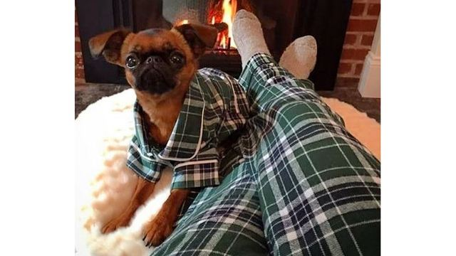 6f4906ce99 Now you and your pup can cozy up in matching holiday pajamas