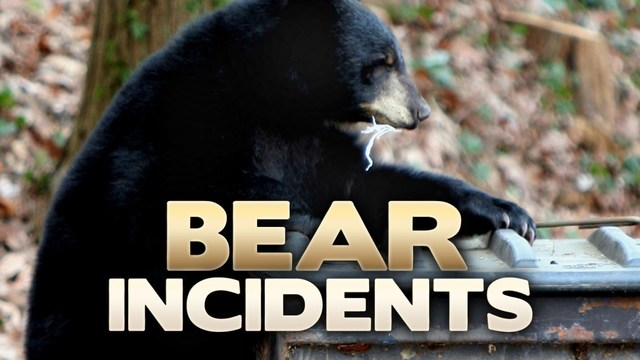 No charges planned for parents of girl attacked by bear