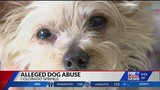 Dog owner charged after severe abuse on 11-year-old dog