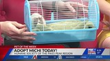 May 22 Pet of the Week: Michi